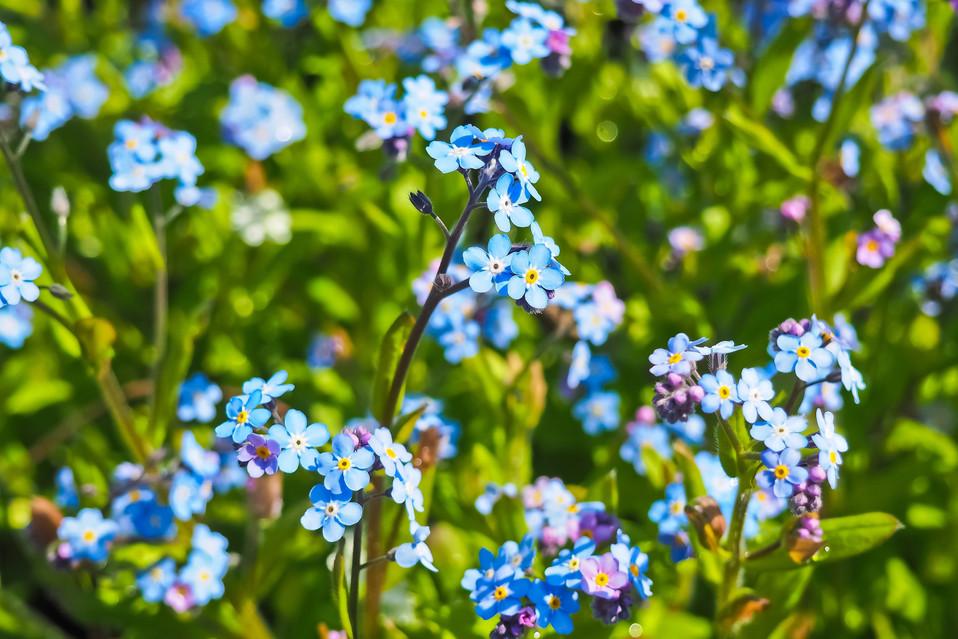 beautiful-bloom-blooming-414975.jpg