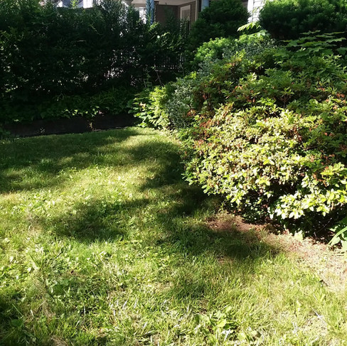 Mira front shrub trim (before).jpg