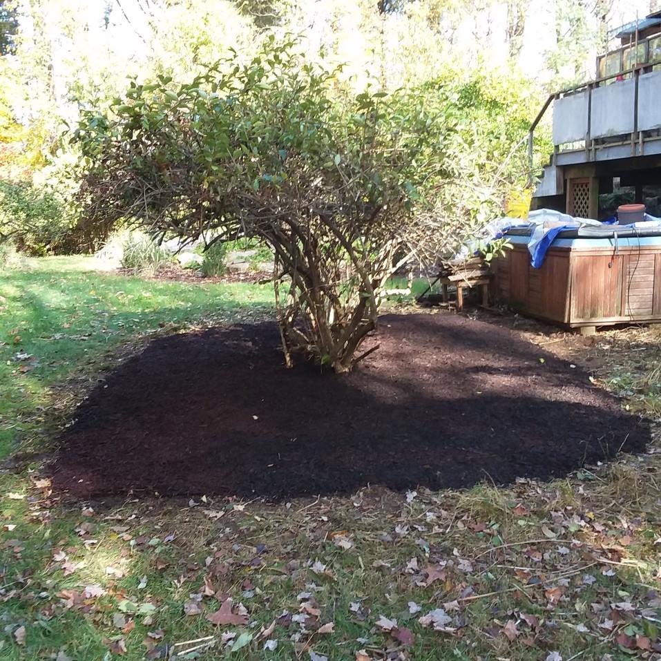 Ransom - Back tree (after).jpg