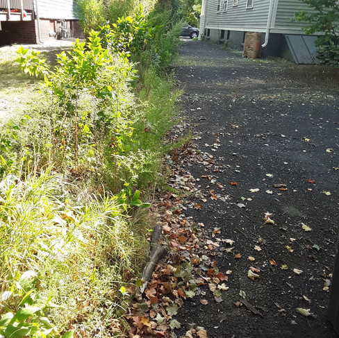 Stephen driveway weeding (before).jpg