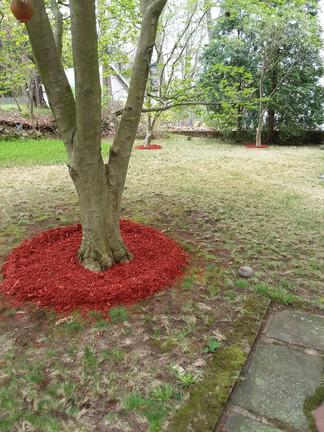 C. Parsons backyard mulch.jpg