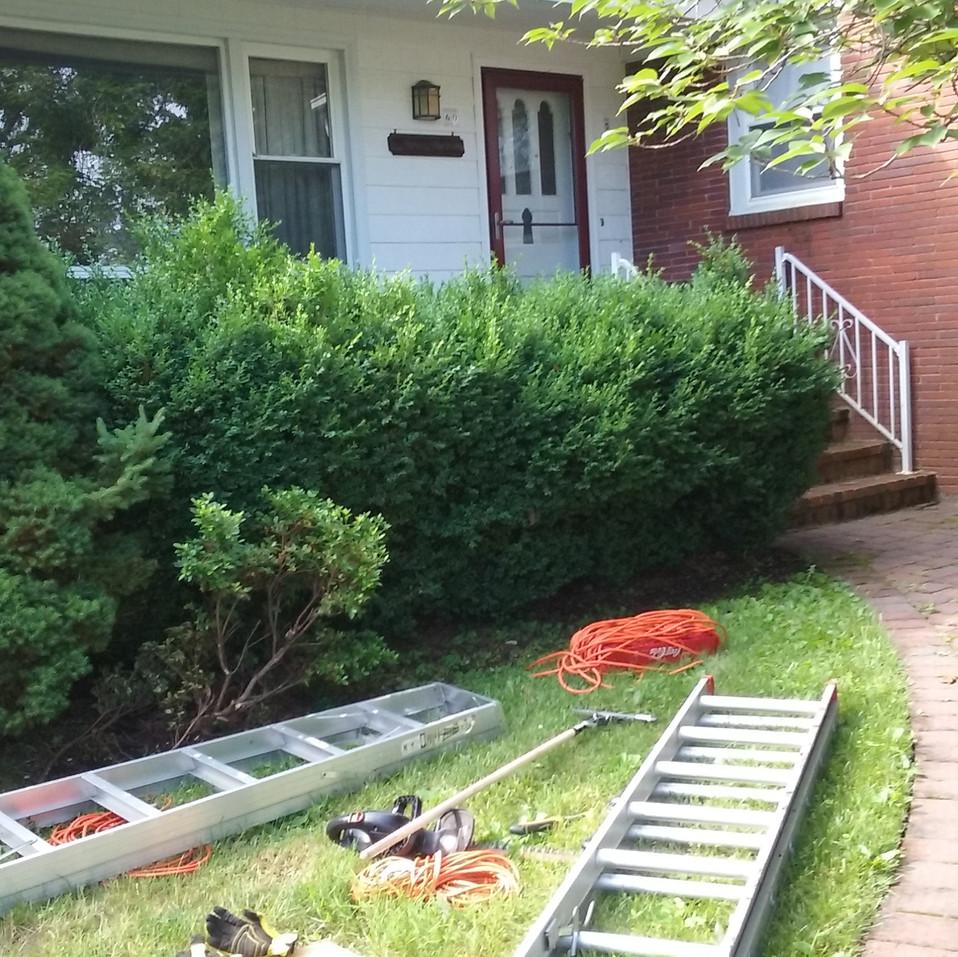 Barbara hedge trim (before).jpg