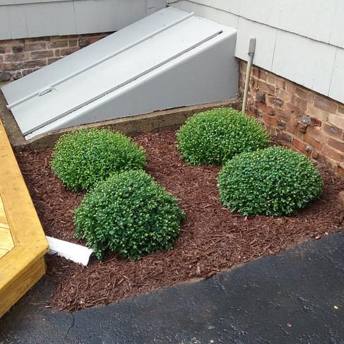C. Mayer backyard garden (after).jpg