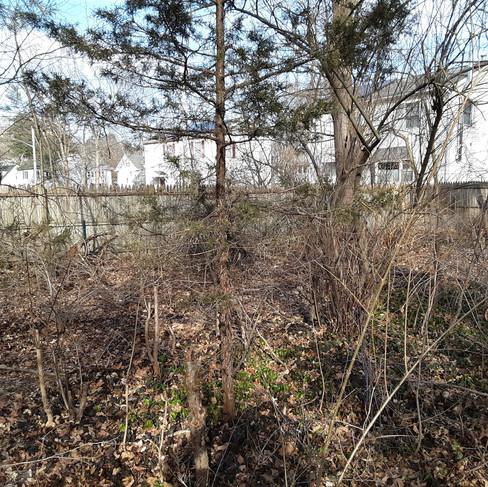 Charlie Fabian backyard (before).jpg