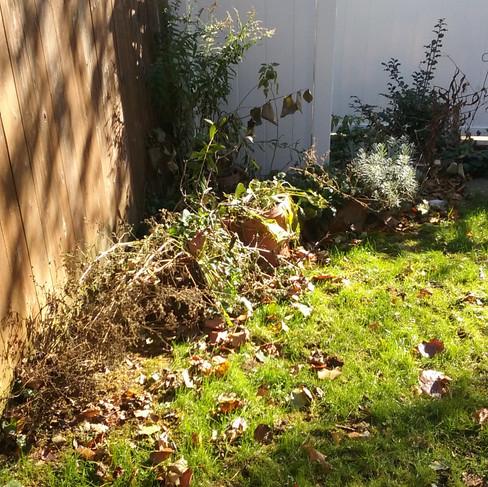 A.Glassman backyard (before).jpg