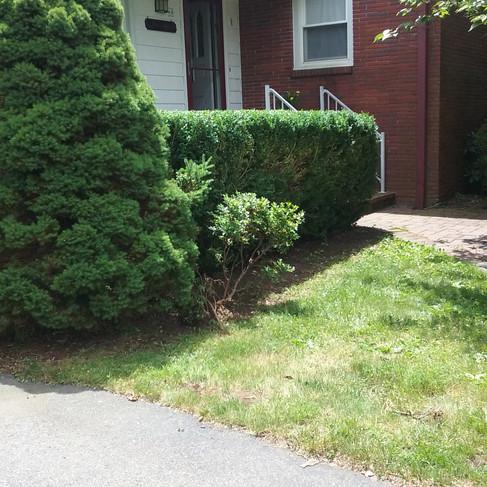 Barbara hedge trim (after).jpg