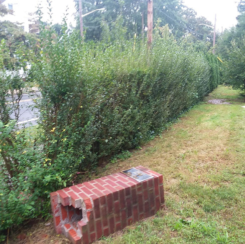 A. Winslow front hedge trim2 (before).jp