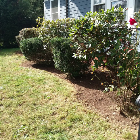 Abigail Winslow - Hedge trim (after).jpg