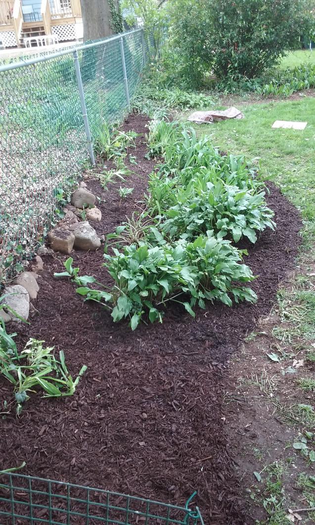 E. Griest mulch backyard.jpg