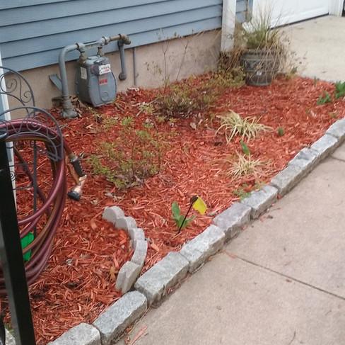 Garden (before).jpg