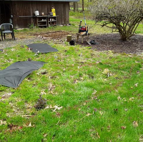 Ransom garden (before).jpg