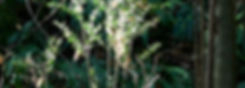 Nature ok.jpg