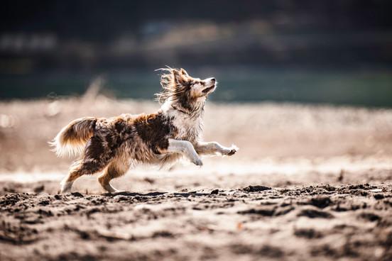 Hundefotografie_Amy