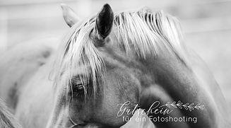 Pferdefotoshooting_Gutschein_Pony