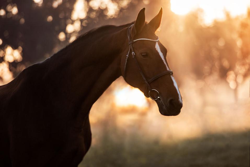 Pferdefotografie_Portrait