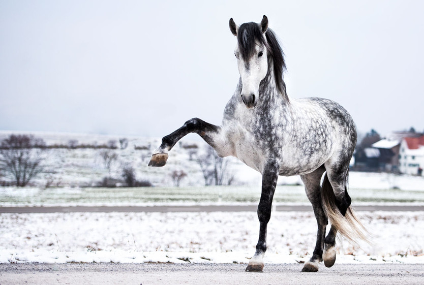 Pferdefotografie_Gandal_Portrait