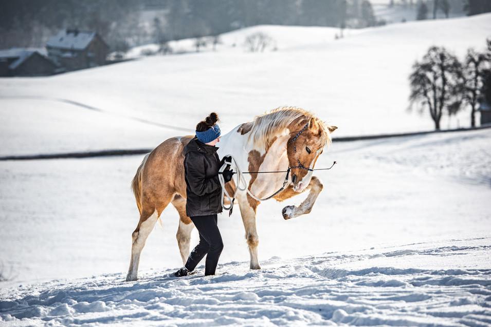 Pferdefotografie_Lucky