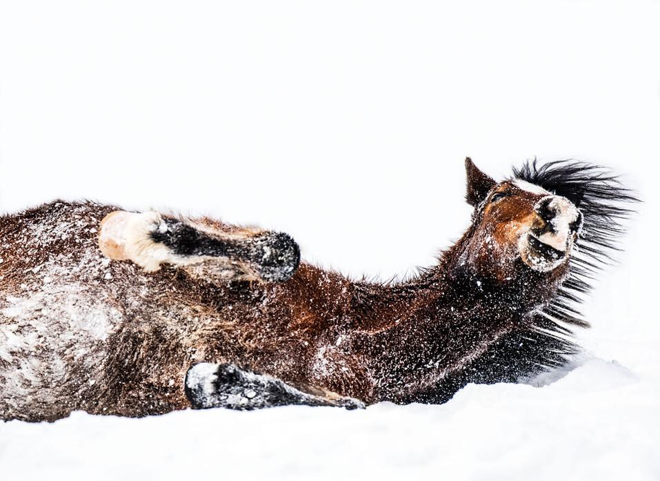 Pferdefotografie_Herde_Welshpony