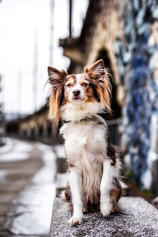 Hundefotografie_Amy_City