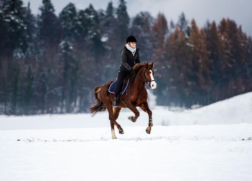Pferdefotografie_Magique