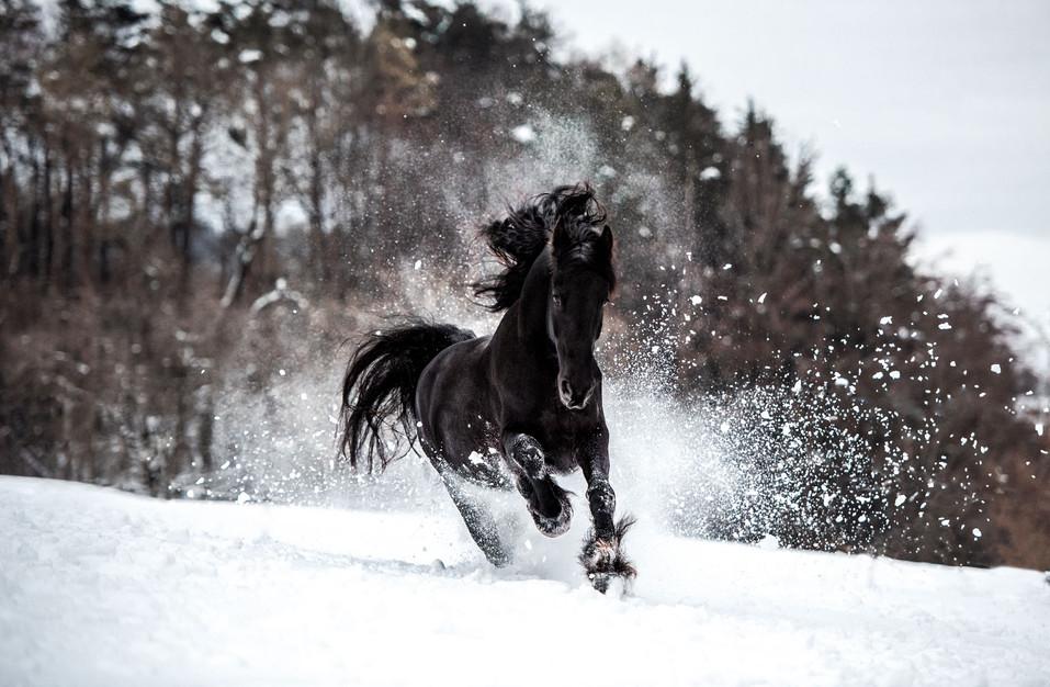 Pferdefotografie_Hidalgo