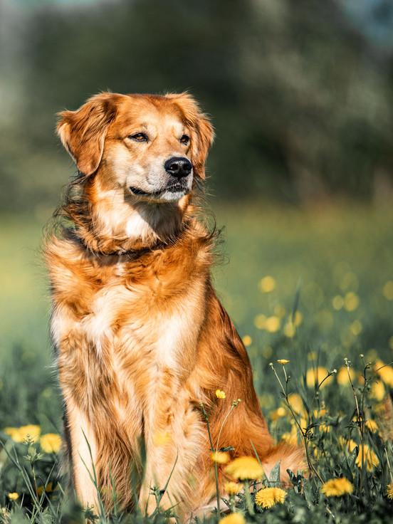 Hundefotografie_Gioia