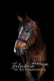 Pferdefotoshooting Gutschein Schwarzer Hintergrund