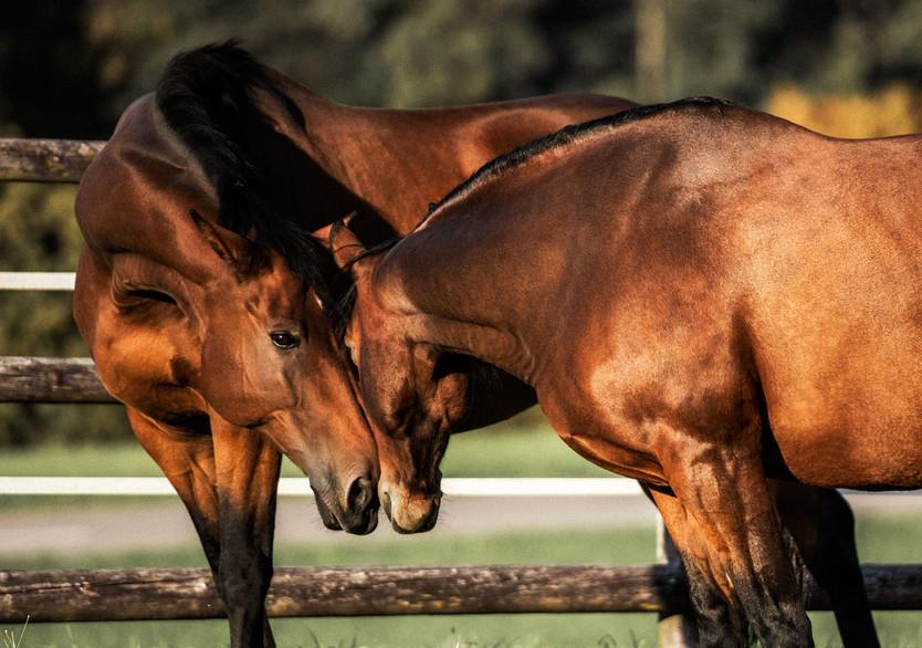 Pferdefotografie_Livio-Rosalie