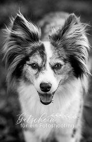 Hundefotoshooting Gutschein