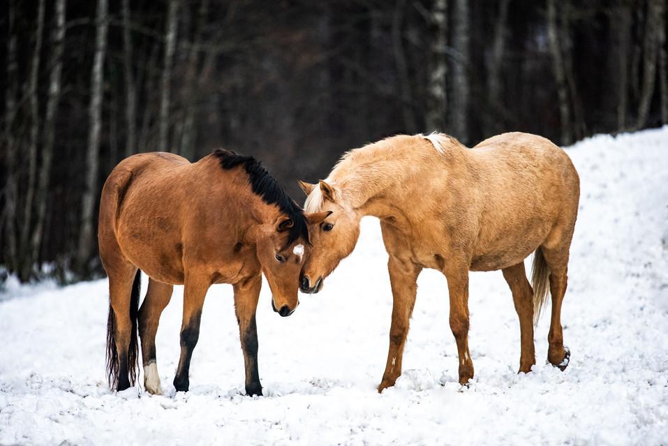 Pferdefotografie_Lana_Duffy
