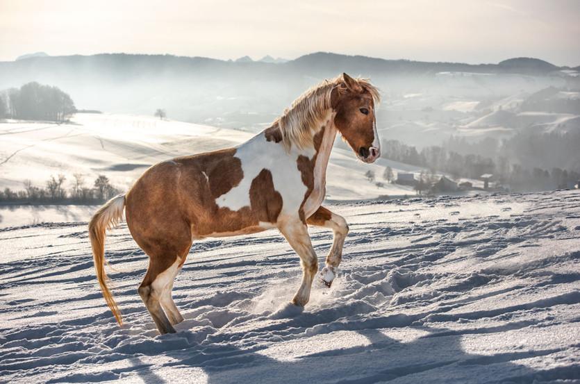 Pferdefotografier_Lucky