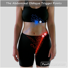 The Abdominal Oblique trigger points cause abdominal pain, pelvic pain, and genitalia pain.