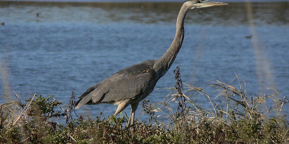 Bird watching at the Ridgefield National Wildlife Refuge