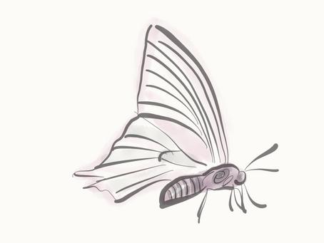 Über Schmetterlinge, die gehen.