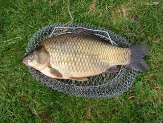 Рыбалка на карася - Как и когда ловить карася в разное время года