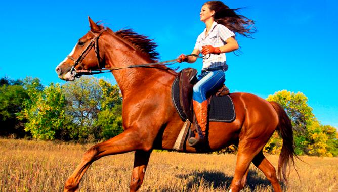 Катание на лошадях.png