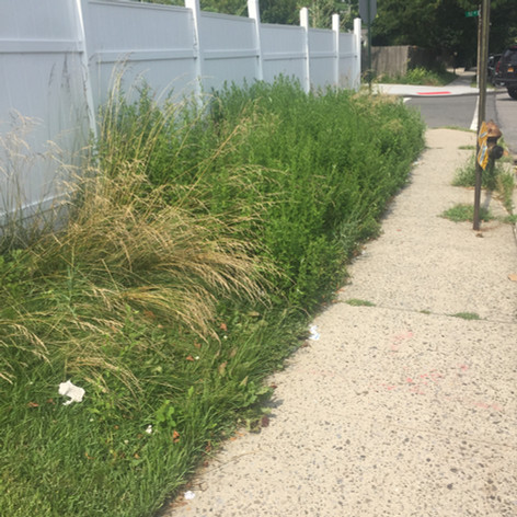 over grown weeds, before