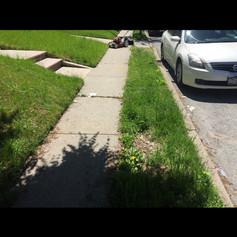 Before, lawn cut