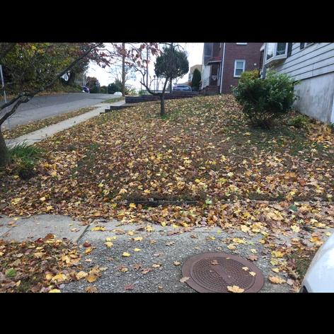 After leaf clean up !