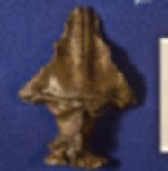 troodon_DSC_1268.JPG