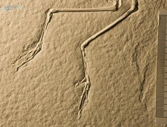 archaeopteryx_sp_DSC_8419.JPG