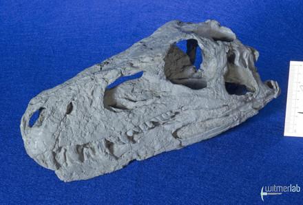 Herrerasaurus_DSC_7473.JPG