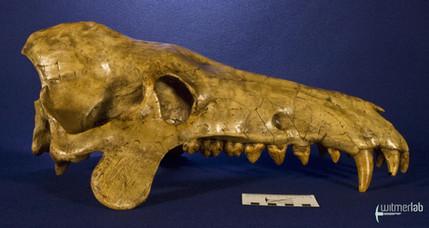 archaeotherium_DSC_0739.JPG