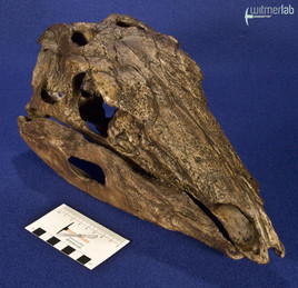 stegosaurus_DSC_9817.JPG