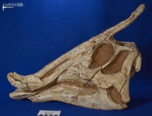 saurolophus_DSC_0781.JPG