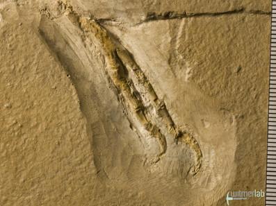 archaeopteryx_DSC_8381.JPG