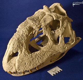 majungasaurus_DSC_9501.JPG