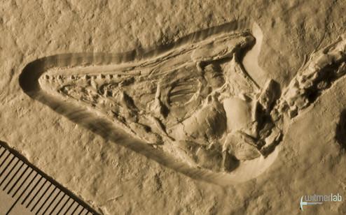 archaeopteryx_sp_DSC_8392.JPG