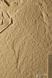 archaeopteryx_sp_DSC_8529.JPG