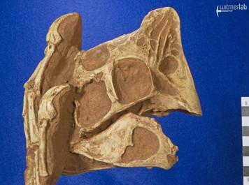 oviraptor_DSC_7789.JPG
